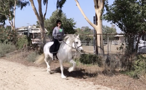 Horseback Riding (canter / trot / jump)
